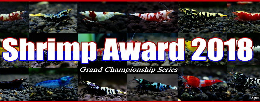 【shrimp award 2018】 出品中